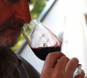 5 Steps - Corporate Wine TAsting Theme