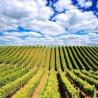 Vine to Wine Tasting Day