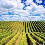 Old World v New World Corporate Wine TAsting Theme